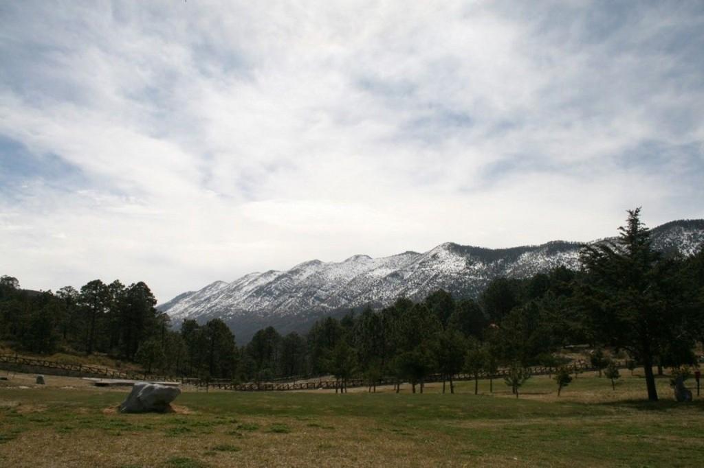 bosques de montería en coahuila con nieve
