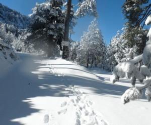 bosques de montería nieve en coahuila