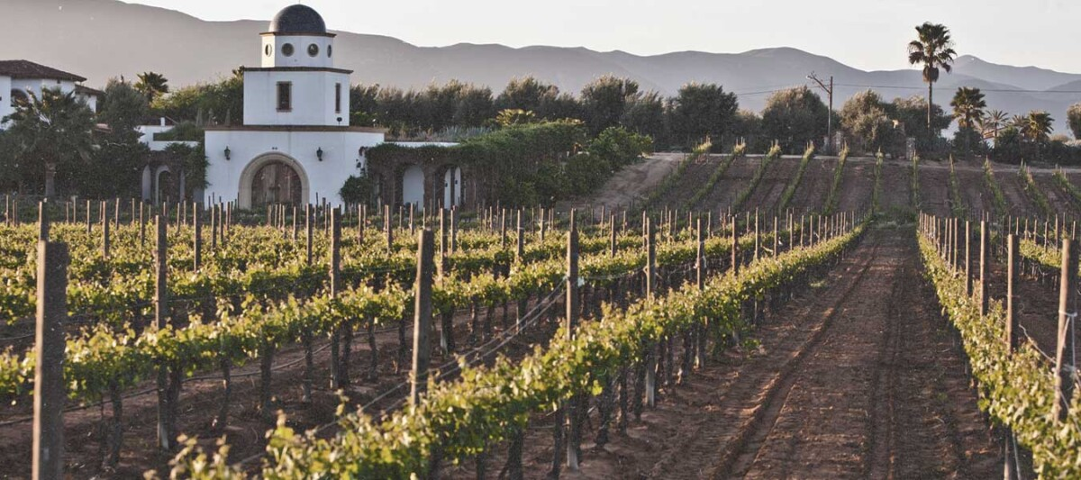 ruta del vino, viñedos en Mexico, Baja California