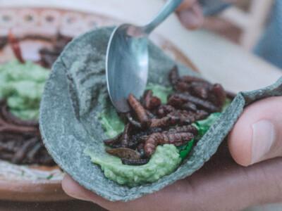 Insectos comestibles, recetas mexicanas, gastronomia mexicana, insectos mexicanos