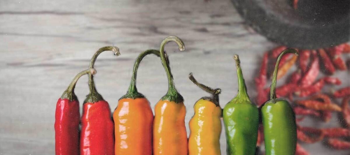 tipos de chile, variedades de chile, gastronomia mexicana