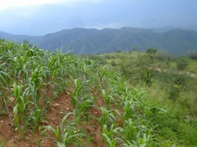 cultivos sierra mixteca méxico