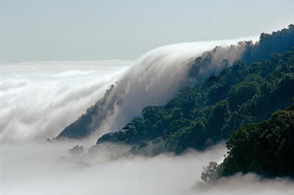 Este es el bosque más mágico del mundo según la BBC (y está en México)