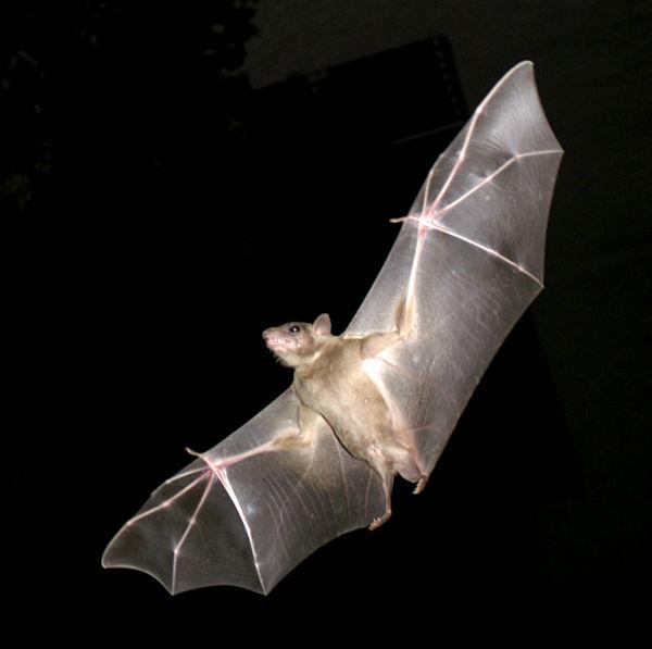 murciélago animales mitológicos prehispánicos