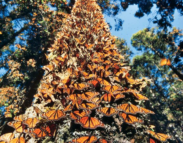 festival de la mariposa monarca