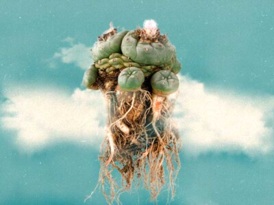 plantas-mexico-sagrado-culturas