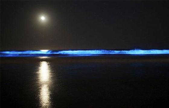 bucerías nayarit playas bioluminiscentes méxico