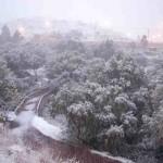 nevada zacatecas 2016