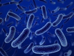 tela antibacterias creada mexicanos
