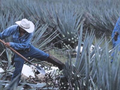 tequila jalisco, bebidas mexicanas tradicionales, bebidas alcoholicas mexicanas