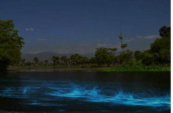 Laguna de Manialtepec bioluminiscencia