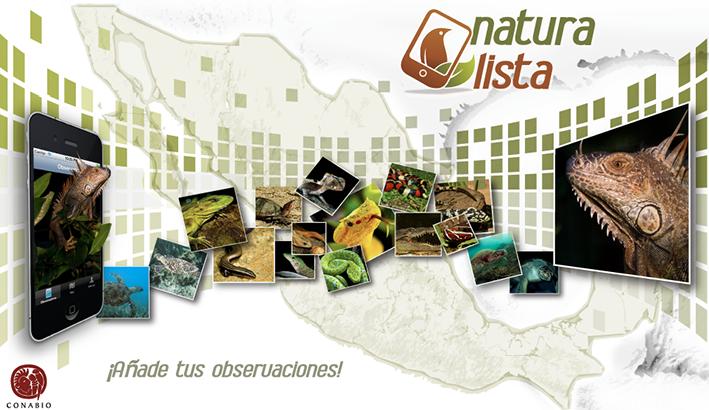 app para identificar plantas y animales de méxico naturalista conabio