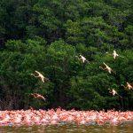 Foto: yucatan.for91days.com