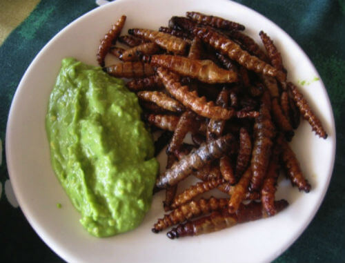 gusanos de maguey comida prehispánica