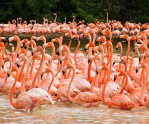 flamencos Biósfera Celestún
