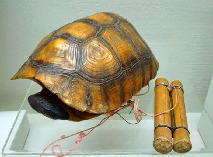 caparazon tortuga instrumento musical