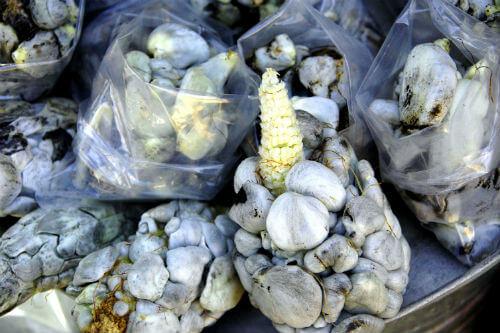 huitlacoche platillos raros mexicanos