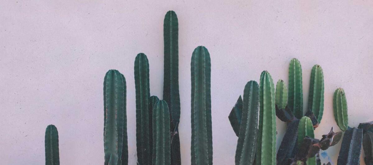 instagram, mexicanos, fotografia