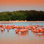 Al lugar puede accederse solo en lancha y manteniendo cierta distancia de las aves. Foto: conacento.com.mx