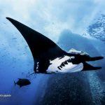 ganador Concurso Nacional de Fotografía de la Naturaleza méxico