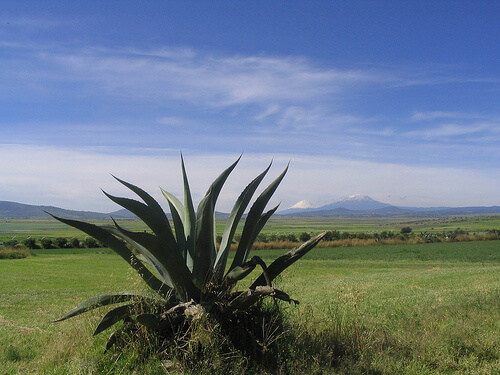 Apan, maguey, pulque