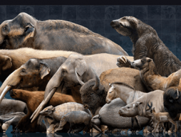 animales antiguos méxico edad de hielo