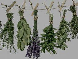 Atados de plantas o hierbas para hacer limpias tradicionales en México