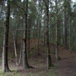 bosque luciérnagas tlaxcala méxico