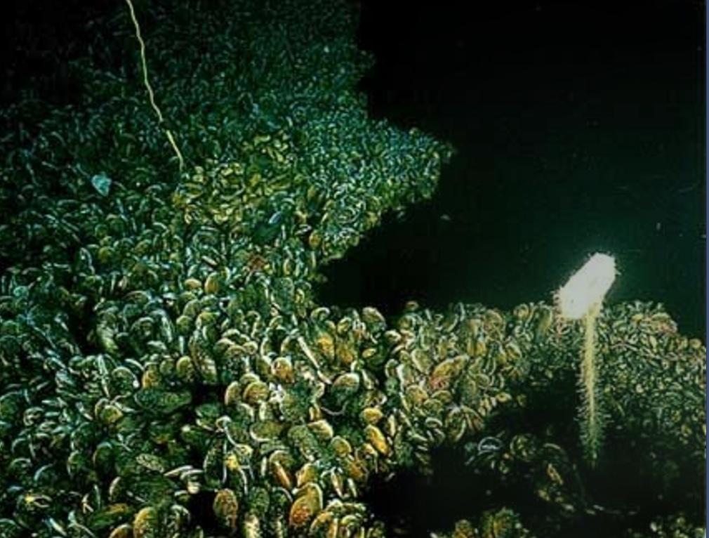 lago debajo del agua yucatán