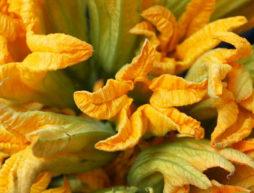 tlemole flor de calabaza
