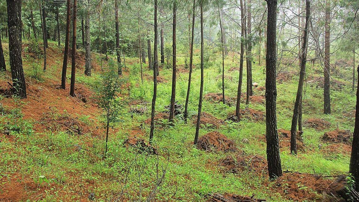Laatzi Du bosque sustentable oaxaca