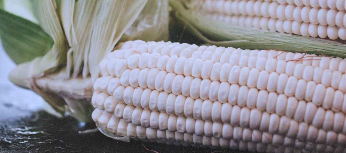 maiz cacahuacintle, central de abastos, elote cacahuacintle