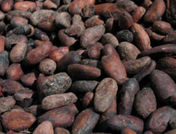 cacao historia usos