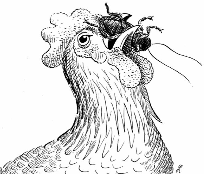 la gallina cuento nahuatl