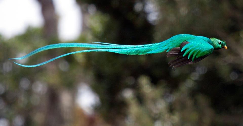 quetzal-chiapas