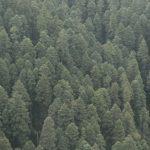 Vista del Parque Nacional El Chico desde la Peña del Cuervo.