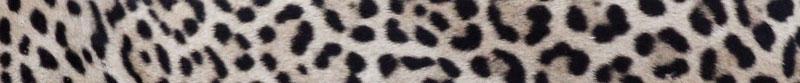 escritura-dios-jaguar-borges