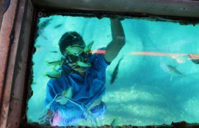 lanchas transparentes acapulco caleta y caletilla
