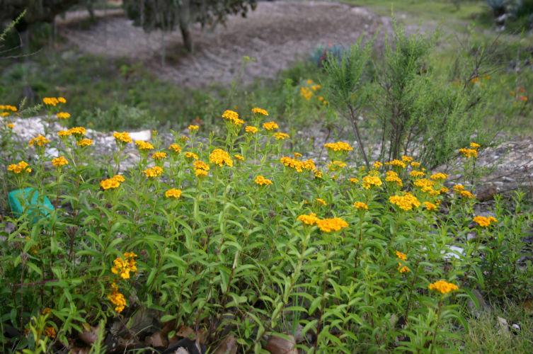 plantas aluciogenas mexico prehispanico