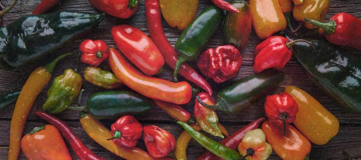 variedad de chiles, chiles mexico, chiles endemicos