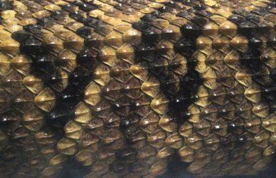 canamayte-serpiente-cascabel-mayas-mexico