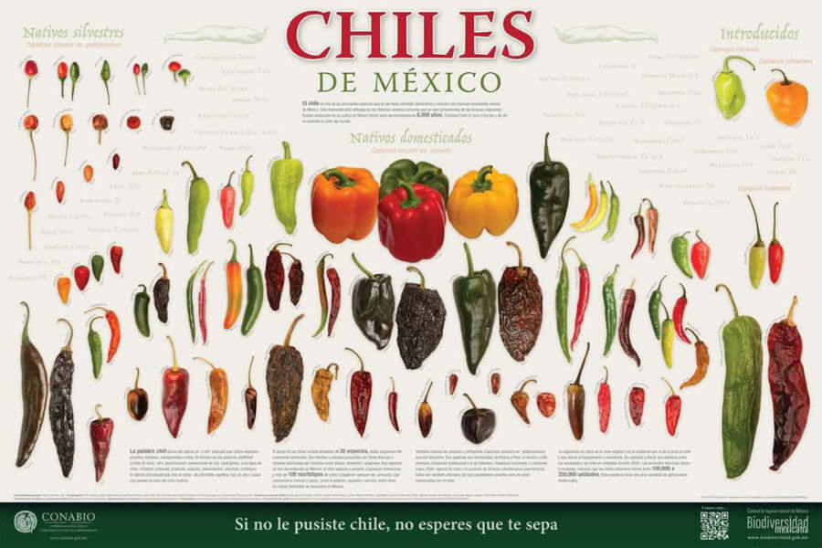 chiles endemicos de mexico