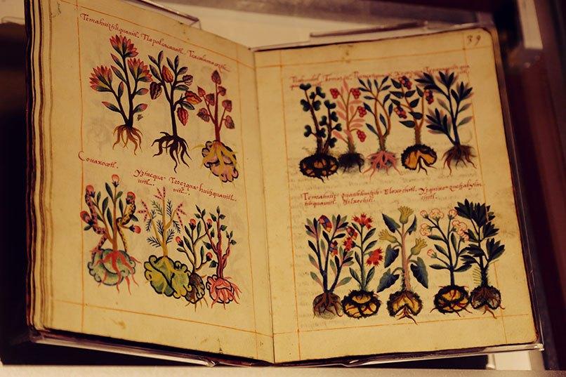 codice-azteca-medicina-prehispanica
