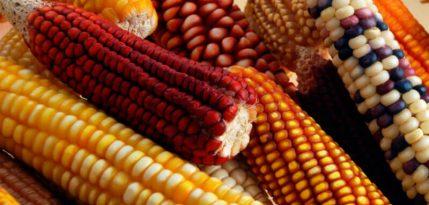 dieta-maiz-frijol-y-amaranto