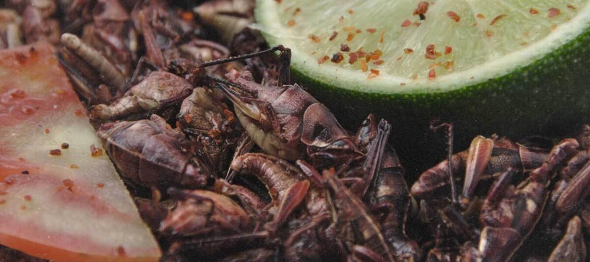 alimentos mexicanos, alimentos prehispanicos. proteina vegetal