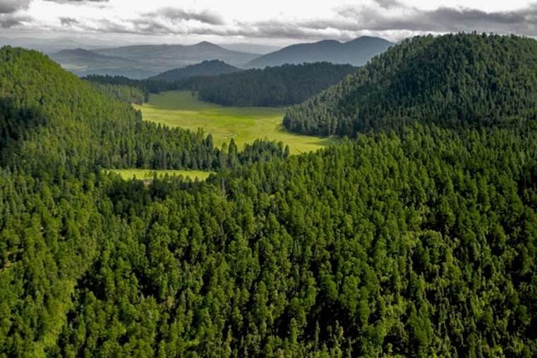 bosques mexico amanalco
