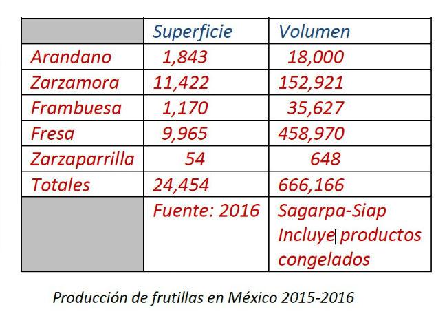 cultivo frutillas bosque mexico sustentabilidad