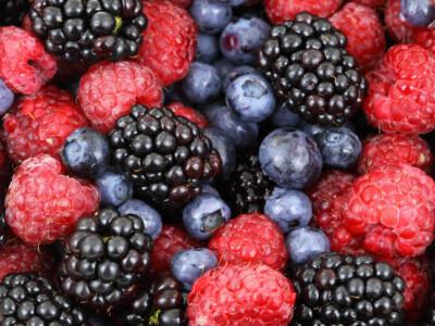 frutillas del bosque mexico cultivos mas sustentables