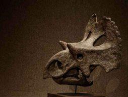 nuevo dinosaurio coahuila mexico yehuecauhceratops