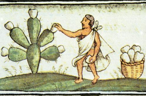 tuna codices prehispanicos